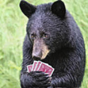 Black Bear Says I Call  Art Print