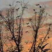 Black Birds At Sundown Art Print