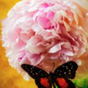 Black Butterfly On Peony Art Print