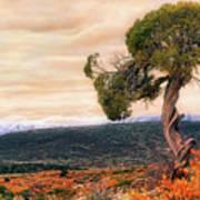 Black Canyon Juniper - Colorado - Autumn Art Print