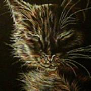 Black Cat Drawing Art Print
