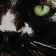 'black Cat' Art Print