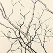 Black Crested Titmouse Art Print