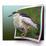 Black Crowned Night Heron - Use Red-cyan 3d Glasses Art Print