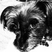 Black Dog Looking At You Art Print
