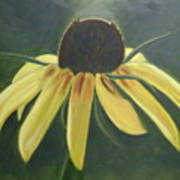 Black Eyed Susan Art Print