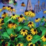 Black-eyed Susans At The Bag Factory Art Print