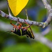 Black Grasshopper Art Print
