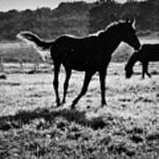 Black Horse. Art Print