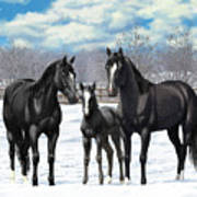 Black Horses In Winter Pasture Art Print by Crista Forest