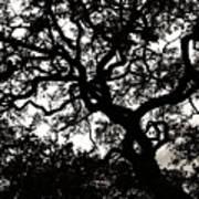 Black Jack Oak Art Print