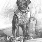 Black Labrador Duck Hunting Pencil Portrait Art Print