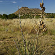 Black Mesa Cacti Art Print by Charles Warren