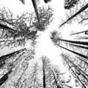 Black N White Sky-trees Art Print