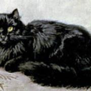 Black Persian Cat Art Print