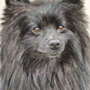 Black Pomeranian Painting Art Print
