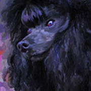 Black Poodle - Square Art Print