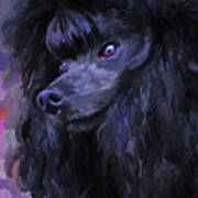 Black Poodle Art Print