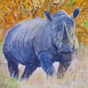 Black Rhino Is The Evening Sun Art Print