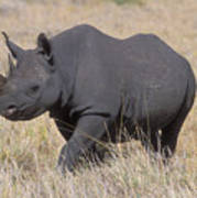 Black Rhino On The Masai Mara Art Print