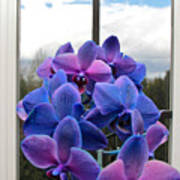 Black Sapphire Orchids  Art Print by Aaron Berg