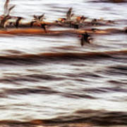 Black Skimmers Of Long Beach - Mississippi - Birds Art Print