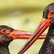 Black Storks Jerez De La Frontera Spain Art Print
