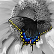 Black Swallowtail And Sunflower Color Splash Art Print