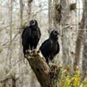 Black Vultures Art Print