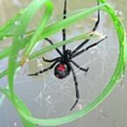 Black Widow Wheel Art Print