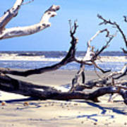 Blackbeard Island Beach Art Print