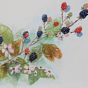 Blackberry Composition Art Print