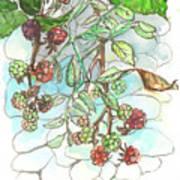 Blackberry Art Print
