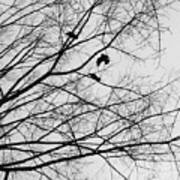 Blackened Birds Art Print