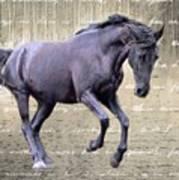 Blackhorse Poetry Art Print