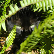 Blackie In The Ferns Art Print