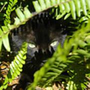 Blackie In The Ferns Art Print