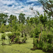 Blackwater Swamp Art Print