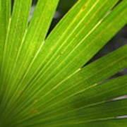 Blades Of Green Art Print