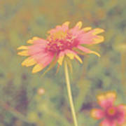 Blanket Flower Portrait Art Print