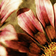 Blanket Flowers Art Print by Bonnie Bruno