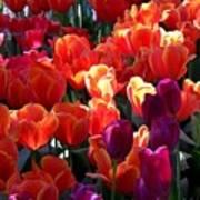 Blankets Of Tulips Art Print