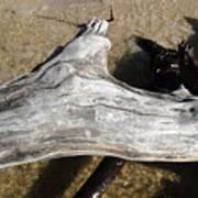 Bleached Driftwood Art Print