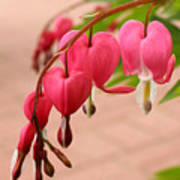 Bleeding Hearts In The Park Art Print