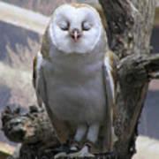 Blinking Owl Art Print
