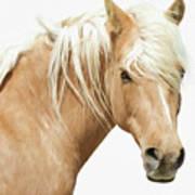 Blonde Stallion Art Print