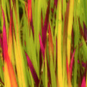 Blood Grass Art Print