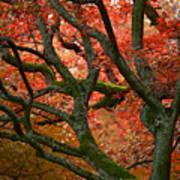 Blood Red Autumn Tree Art Print