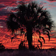 Blood Red Sunset Palm Art Print
