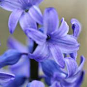 Bloomin Blue Art Print